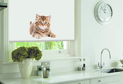 Quality Roller Blinds in Wigan